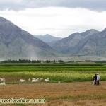 Farmers on the Ningxia plain with the Helan mountains in the background. These mountains were a natural barrier against the enemy.