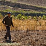 A farmer in his field in Shaanxi Province.