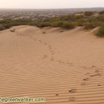 My tracks in the desert North of Yulin.